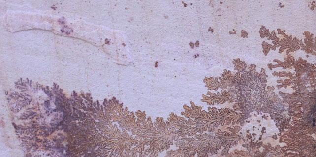 Sandstone Tiles Sydney